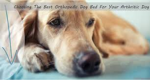 Top Rated Orthopedic Dog Beds by Choosing The Best Orthopedic Dog Bed For Your Arthritic Dog
