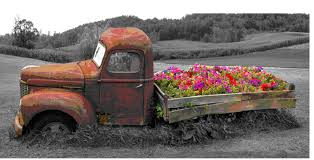 An Old Truck With Flowers In The Bed By Pete Ramberg