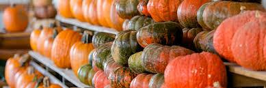 Pumpkin Patch Auburn Al by Lyon Family Farms Taft Pumpkin Patch Fall Pumpkin Picking