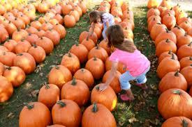Best Pumpkin Farms In Maryland by Best Pumpkin Patches Near Washington Dc Cbs Dc