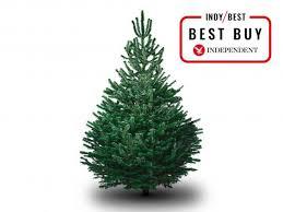 Best Kinds Of Christmas Trees by 13 Best Real Christmas Trees The Independent
