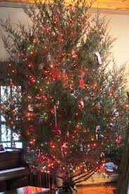 Xmas Tree Waterer by Recipe For Christmas Tree Water Thriving Home