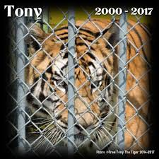 100 Tiger Truck Stop Louisiana Free Tony The Posts Facebook