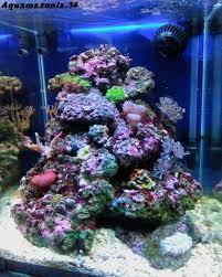 aquarium nano eau de mer nano recif 30 litres