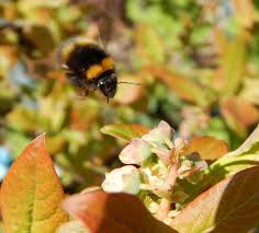 organic garden seeds and bulbs are best for bees
