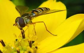 Attracting Insects To Your Garden by Pests And Problems Archives Gardenswag