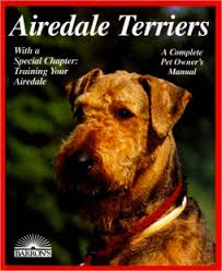 Do Airedale Puppies Shed by Is An Airedale The Right Breed For Your Family U2013 Texas Airedale
