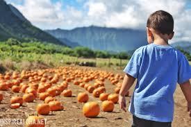Pumpkin Picking Farm Long Island Ny by Picking Pumpkins U2014 Waimanalo Pumpkin Patch U2013 Inspire Aloha