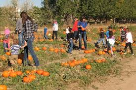 Studts Pumpkin Patch Hours by Moon Farm Pumpkin Patch And Petting Zoo Moon Farm