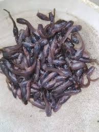 1 Share Re Quality Catfish Fingerlings
