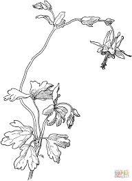 0bf588c1bd6a7b1a9d7b350986c7b6e0 Aquilegia Drawing Flowers