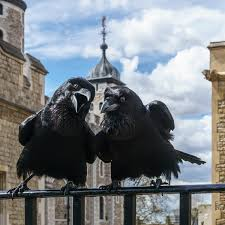Ravens Of The Tower Of London Wikipedia