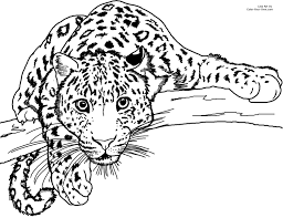Amur Leopard Coloring Page Lurking Colouring PagesColor