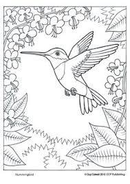 Humming Bird Coloring Page