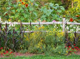 A Rustic Wood Perimeter Fence With Beautiful Wildflowers In Bold Color