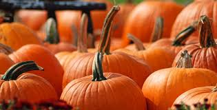 Pumpkin Patch Bastrop County by The 10 Best Pumpkin Patches In Texas In 2016