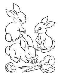 Baby Rabbit Coloring Pages Eating Carrot