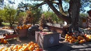 Pumpkin Patch Santa Rosa by Sonoma County Pumpkin Patches Sonoma Pumpkin Farms U0026 Festivals