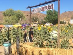Pumpkin Patch Near Santa Clarita Ca by The Lombardi Ranch Fall Festival Is Coming To A Close