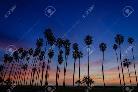 Tropical Beach Sunset With Silhoette Of High California Palm Stock