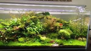 100l Aquascape - YouTube Aquascaping Artist Oliver Knott Scapingaquarium Pinterest Schwimmende Stein Steine Im Aquarium By Knott Youtube Aquascapi Sequa Interzoo 2012 Feat Chris Lukhaup Live Part 3 The Island Aquascape Step Aquariology With At The Koelle Zoo Heidelberg New Project Photo Editor Online And Editor Made Teil 1 Inspiration Tips Tricks Love Aquascaping Octopus Aquarium Via Aquac1ubnet