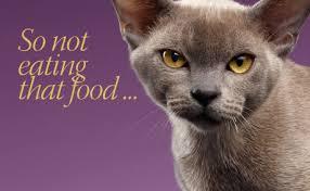 cat wont eat my cat won t eat that