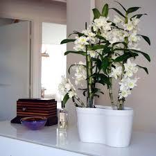 mémo entretien de vos orchidées pour que les orchidées se