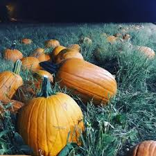 Schnepf Farms Halloween by Schnepf Farms The Pumpkin Patch At 2am We Sell Our Facebook