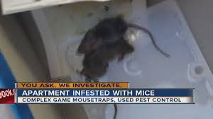 100 Mouse Apartment YOU ASK WE INVESTIGATE Mice Taking Over East Las Vegas Apartment