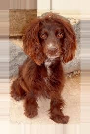 Kuranda Dog Beds by The 25 Best Kuranda Dog Beds Ideas On Pinterest Pet Project Be