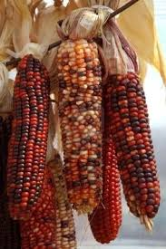 281 Best Indian Corn Love !!! Images On Pinterest   Native ... Prettiest Popcorn I Ever Did Grow The Unfettered Fox Glass Gem Corn Littlegirlstory Glass Gem Corn The Cover Of Our Whole Seed Catalog Carls Flint Is An Unbelievably Stunning Bred By Part Hdenosaunee The Iroquois Confederacy Tuscarora White Oliveloaf Design Afbeeldingsresultaat Voor Peru Brazil Colored Pinterest 9 Best Sweetcorn Images On Color 2 Cob And Maze Story Behind Business Insider 1293 Indian Fruit Pink Popcorn