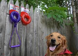 Fun In The Sun - The 6 Best Outdoor Dog Toys Of 2017 Dog Leashes Leads Best For Pets Petco How To Make A Leash Holder Leash Holder And Quadpro Retractable Leashpet Lead 315 Inches For Urpower 164 Feet Nylon Official A Guide Buying The Rover Blog Installation Of Cable Run Youtube Offleash Dog Bar Opens In Fairhaven Tap Trail Side Yard Solution Pet Friendly Xgrass Artificial Turf Run The Dog Yard Aliexpresscom Buy Traction Rope 2017 Abs Large Handle April 2012 Backyard Beyond Fence Borders Tips About Safety