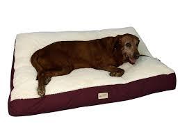 Unchewable Dog Bed by Terrific Oversized Dog Bed 70 Xl Memory Foam Dog Bed Uk Amazoncom