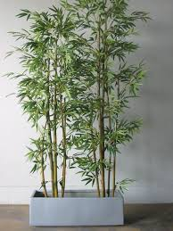 planting bamboo in a pot bamboo in pots for deck privacy do you all see a trend here
