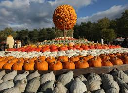 Pumpkin Festival Cleveland Ohio by 121 Best Pumpkin Festivals Images On Pinterest Fall Scenery And