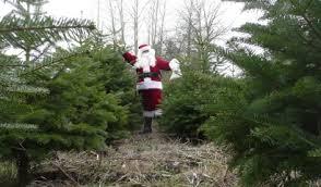 Pfaffs U Cut Christmas Trees