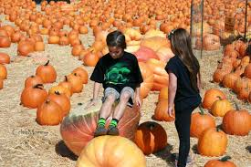 Pumpkin Patch San Fernando Valley Ca by Tierra Rejada Pumpkin Picking U2013 Theschottlife