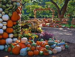 Half Moon Bay Pumpkin Patches 2015 by 7 Best Dallas Arboretum Images On Pinterest Dallas Arboretum