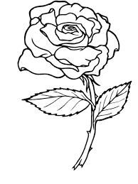 Coloring Page Roses Nature 2