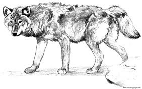 Wolf Alone Coloring Pages