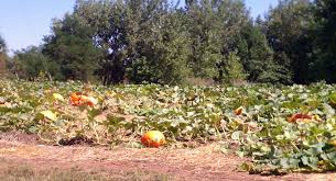 Denver Pumpkin Patch by Littleton Co Archives Real Estate In Denver And The Suburbs