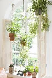 Plants For Bathroom Without Windows by Best 25 Bedroom Plants Ideas On Pinterest Bedroom Plants Decor