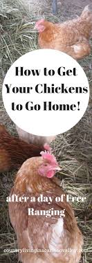 How DO You Get The Chickens To Go Back In Their Coop At The End Of ... Backyard Chickens 101 The Moms Guide To San Diego Amazoncom Complete Beginners Lauren Diamant Are Hard Workers In Our Bnyard Every Animal We Raise Renew Pinterest Flock Has A Complex Social Hierarchy With Singular Leader Raising For Dummies Modern Farmer Sister Chicks Club House Backyard Home Cluck Central Cedar Falls Iowa Public Radio 2015 Fact Sheet Chicken Egg 141 Best Images On