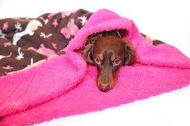 Burrowing Dog Bed by Dachshund Fleece Weenie Pocket Pet Bed Burrow Doxie Bed Fair