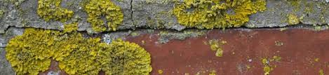 anti mousse murs exterieurs antimousses