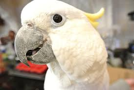 Parrot Caught Singing Bodies Hit The Floor by Think Your Pet Bird Hates You Petcha