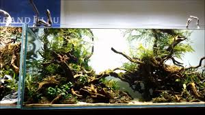 Aquascape Wood Aquascaping Fish Tank Projects Aquadesign George Farmers Live Aquascaping Event At Crowders Ipirations Mzanita Driftwood For Inspiring Futuristic Home Planted Riddim By Alejandro Menes Aquarium Design Contest Ada Horn Wood Beautiful Natural Hardscape For Superwens 2012 Aquascape Petrified Youtube Fish Aquariums The Worlds Best Planted Aquarium Products Designs Reviews Out Of Ideas How To Draw Inspiration From Others Aquascapes 7 Wood Images On Pinterest Sculpture Lab Tutorial Nano Cube Size 20 X 25h