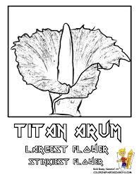 Kids Book Coloring Flower Online Pages Of Printouts Free Images Rare And Common Sunflowers Titan Arum Dogwood