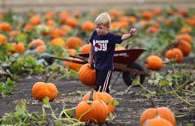 Pumpkin Patch Santa Rosa by Patchy Fun Around Sonoma County
