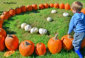 Best Pumpkin Farms In Maryland by Maryland Pumpkin Patches Farms And Fall Festivals U2013 Playful